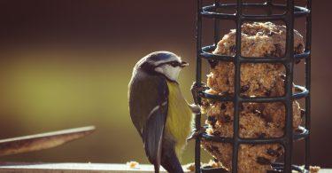 Vogelfutter selbst machen mit 4 kinderleichten Rezepten