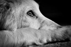 Diese Schüßler-Salze helfen Ihrem Hund bei Angst und Aggression