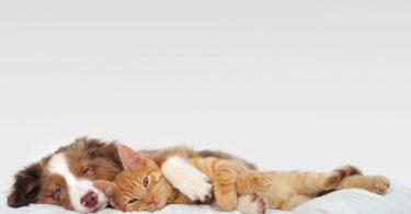 Mit diesen Schüßlersalzen können Sie Vitalität und Immunstärkung von Katze und Hund verbessern