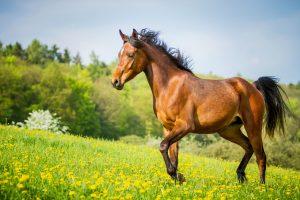 11 immunstärkende Heilpflanzen für Ihr Pferd