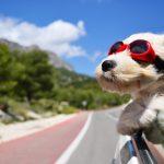 Hyperaktivität bei Hunden ist mit diesen 8 Schüßlersalzen erfolgreich behandelbar