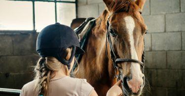 Gallen beim Pferd können Sie mit diesen 5 Mitteln behandeln
