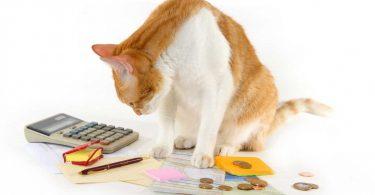Bedenken Sie vor der Anschaffung eines Haustieres unbedingt diese 5 Kostenpunkte
