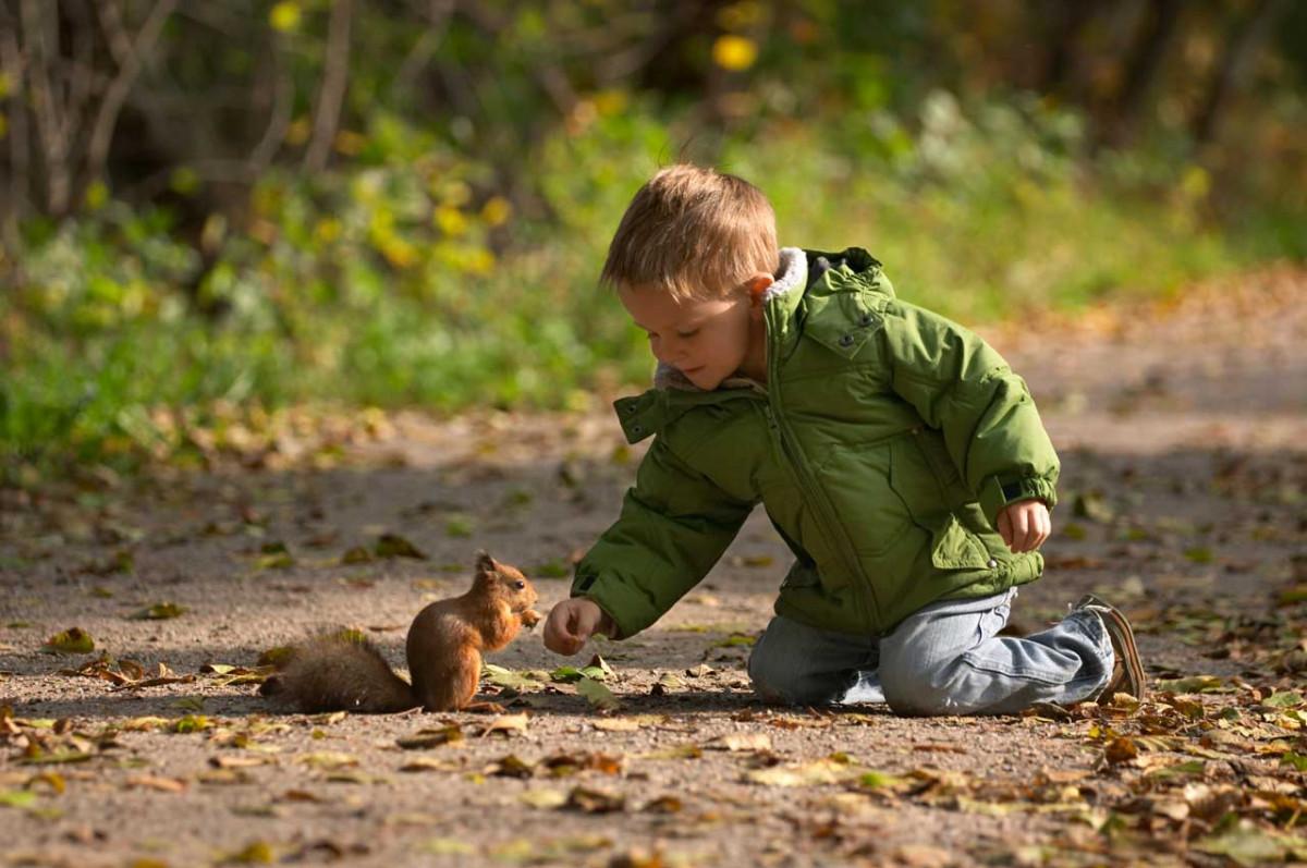 Tiere In Der Natur