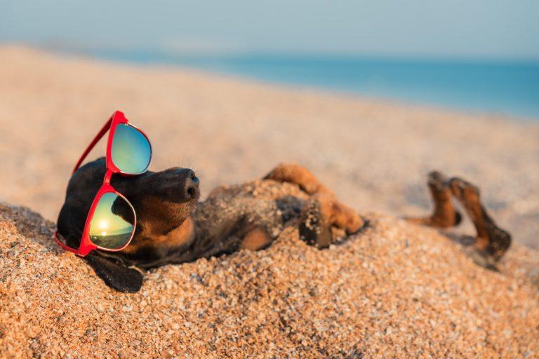 Das müssen Sie beachten, wenn Sie mit dem Haustier in Urlaub fahren