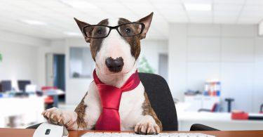 Bürohund: Ein Muss für jedes Unternehmen!
