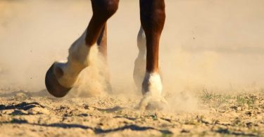 Überbeine sind beim Pferd mit Schüßlersalzen gut behandelbar