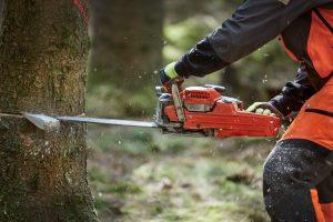 Baumfällung: Alle WEG-Mitglieder müssen zustimmen