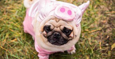 Selbstmanagement: So bändigen Sie Ihren inneren Schweinehund