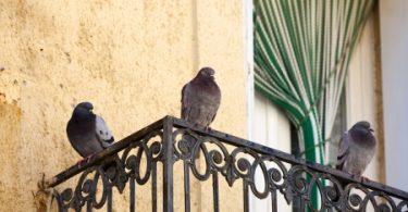 WEG-Mitglied füttert Tauben auf dem Balkon – das geht nicht!