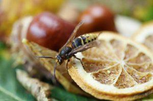 Das können Sie nach einem Wespenstich tun