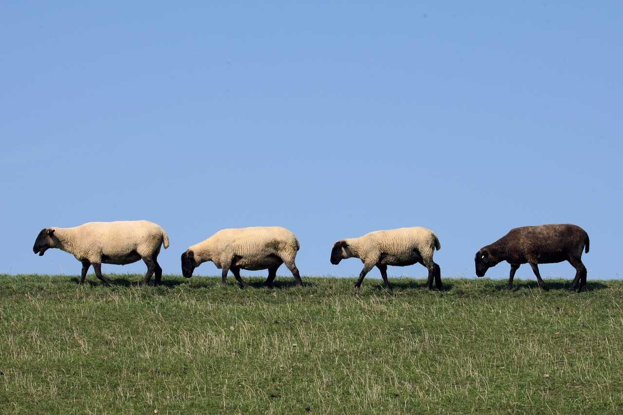 Warnung vor schwarzen Schafen am Telefon…