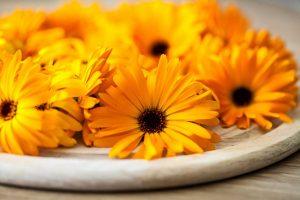 Das homöopathische Mittel Calendula