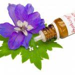 Das homöopathische Mittel Staphisagria