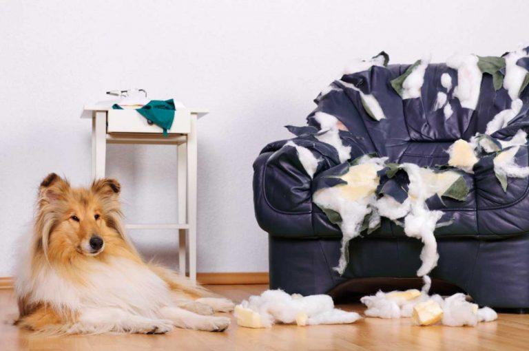 Tierverbote und Leinenzwang für Hunde und Katzen – worüber Sie in Ihrer WEG (nicht) beschließen dürfen