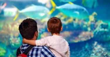 Schöne Ausflugsziele im Inland für Familien