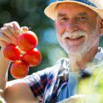 Warum Tomaten gut für die Prostata sind