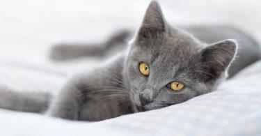 Homöopathie für die Katze – Das Arzneimittel: Lachesis