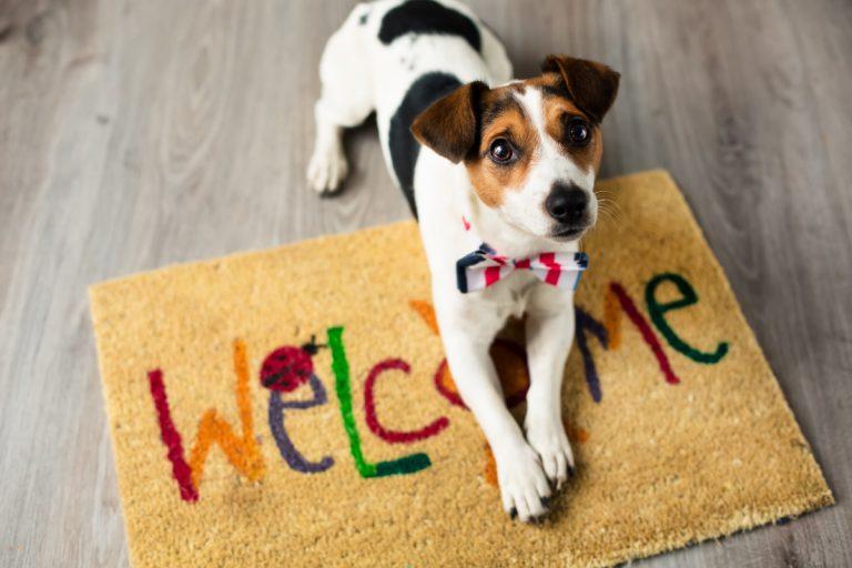 Tierhaltung in der Mietwohnung: Aus diesen 7 Gründen dürfen Vermieter ein Verbot aussprechen