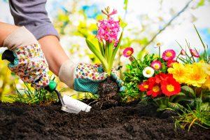 Nachhaltigkeit im Garten: So klappt es