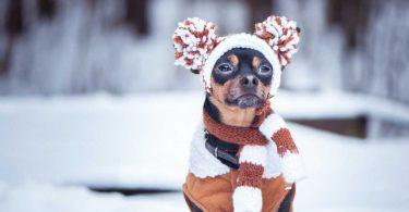 Stannum metallicum für Hunde bei Beschwerden der Atemwege