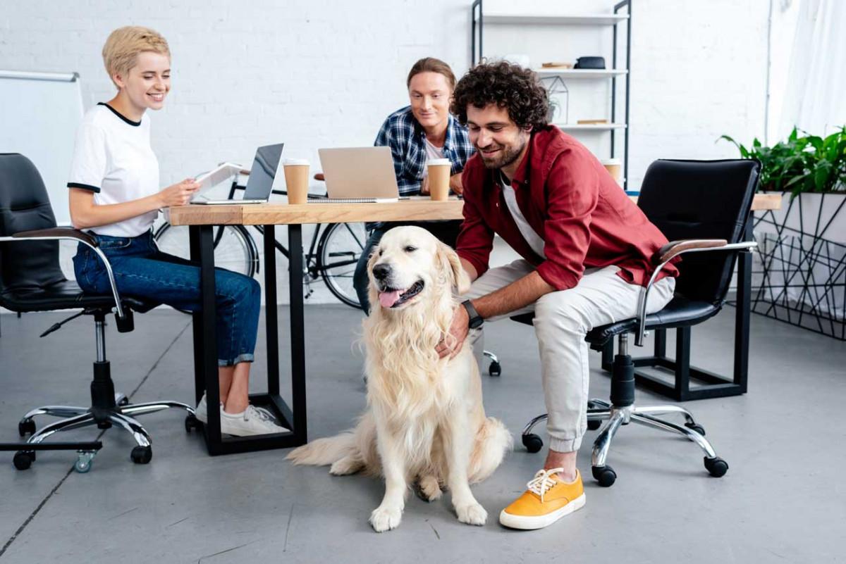 Hund mit ins Büro nehmen - was muss ich beachten?