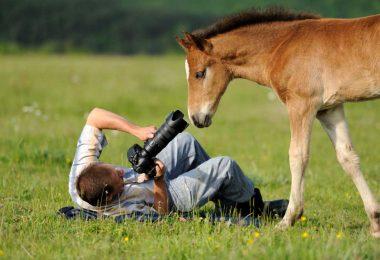 Tierfotografie: Scheue Tiere vor der Kamera