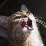 Homöopathie für Katzen: Diabetes mellitus oder Zuckerkrankheit