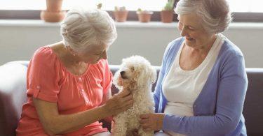 Hunde im Altenheim - was muss im Vorfeld bedacht werden?