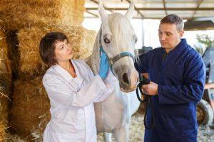 Melanome beim Pferd homöopathisch behandeln