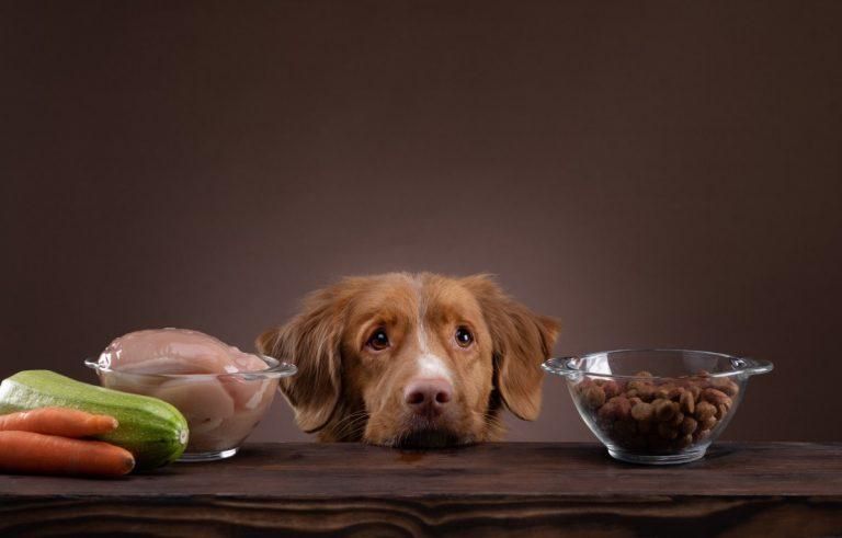 Back to the roots – Den Hund mittels der BARF-Methode ernähren