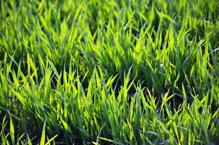 Unser Tipp für den Garten: Jetzt auf Hybridrasen setzen