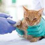 Lohnt sich eine Tierkrankenversicherung?