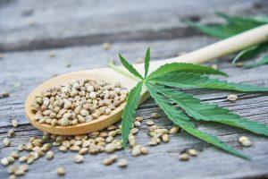 Hanf: Nutzpflanze erlebt Renaissance als Lifestyle-Produkt